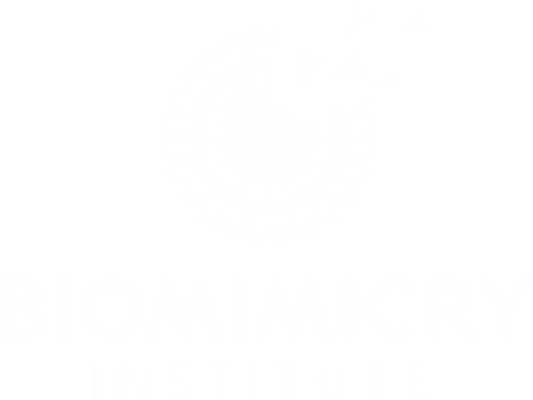 Biomimcry Institute